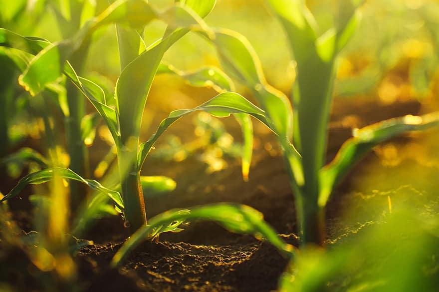 des-legumes-fraichements-recoltes